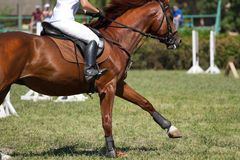 Dressage horse. And a rider Stock Photos