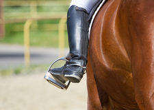 Dressage horse and rider Stock Images
