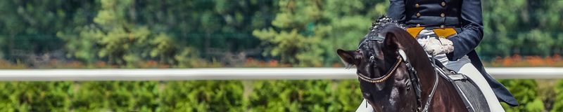Dressage horse and rider, for banner. Black horse portrait during equestrian sport competition. Advanced dressage test. Copy space for your text stock photography