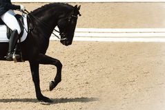 Dressage horse and rider. Black horse portrait during dressage competition. Royalty Free Stock Images