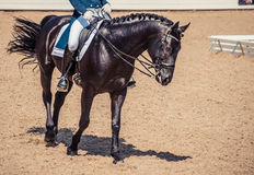 Dressage horse and rider. Black horse portrait during dressage competition. Stock Images