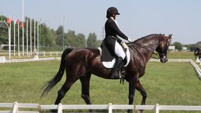 The dressage horse and rider on a green field stock video