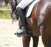 Dressage horse and a rider Royalty Free Stock Images