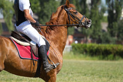 Dressage horse and a rider . Horse jump a hurdle in competition Royalty Free Stock Photography