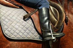 Dressage horse and rider. Horse dressage outdoors and rider Royalty Free Stock Photography