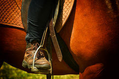 Dressage horse and rider Stock Image
