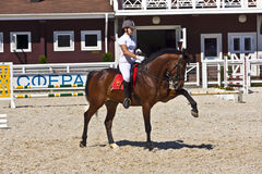 Dressage horse and rider. Royalty Free Stock Image