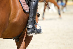 Dressage horse rides Royalty Free Stock Image