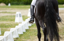 Dressage horse. View from behind Royalty Free Stock Photography