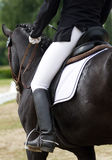 Dressage horse Stock Photos