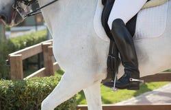 Dressage Horses Stock Photo