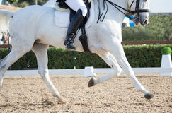 Dressage Horses Stock Images