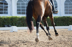 Dressage Horses Stock Photography