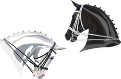 Dressage Horses heads Black and White. Two heads of dressage horses - black with white bridle and white with black bridle Stock Image