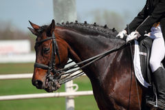 Dressage horses Stock Image
