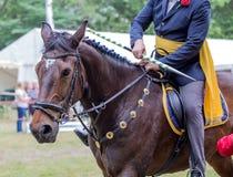 Dressage jeździec koń i Kobylaka koński portret podczas dressage zdjęcie royalty free