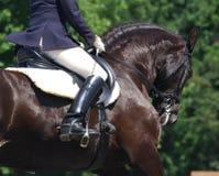 dressage koń Fotografia Royalty Free