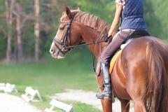Dressage koń Zdjęcia Stock