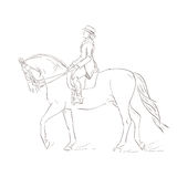 Dressage koń Obraz Stock