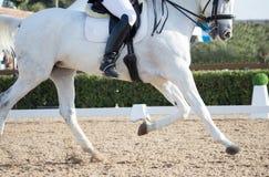 Dressage konie Obrazy Stock