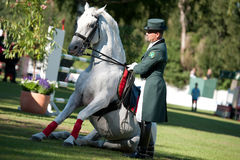 Dressage of Lipizzan stallion during public show Stock Photography