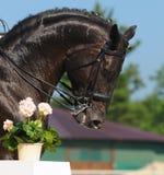 Dressage: Portrait des schwarzen Pferds Lizenzfreie Stockbilder