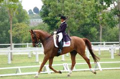 Dressage - PremierCup 2010 Royalty Free Stock Photos