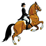 Dressage rider. Horse rider,dressage,equestrian sport,image isolated on white background,side view picture Royalty Free Stock Image