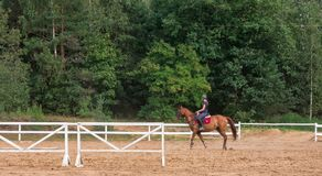 Young girl rider on a dressage in the park on a slender horse. stock photos