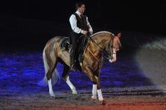 Dressage Rider Stock Image
