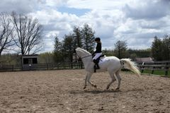 Dressage rider schooling her white horse Stock Photography