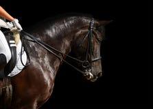 Dressage, schwarzes Pferd Stockbilder