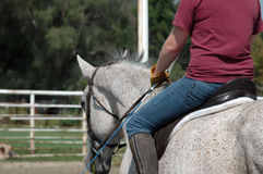 Dressage training Stock Photo