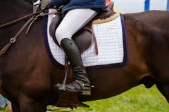 Dressagehäst och ryttare Royaltyfri Foto