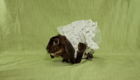 Dressed Bunny Stock Photo