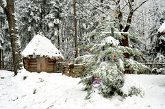 Dressed Christmas tree and small wooden hut in a tranquil winter forest. Royalty Free Stock Photo