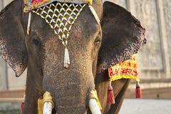 Dressed elephant. Close up elephant eye with Thai style flower headdress Royalty Free Stock Image