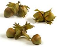 Dressed hazelnuts Stock Photo