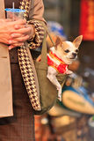 Dressed pet Dog in bag Royalty Free Stock Images