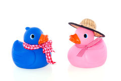 Dressed pink and blue duck Royalty Free Stock Images