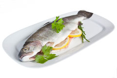 Dressed Rainbow Trout Stock Image