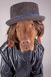 Dressed up dog Royalty Free Stock Photography