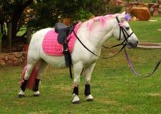 Dressed up party pony Stock Photo