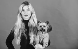 Dressing dog for cold weather. Which dog breeds should wear coats. Girl hug little dog in coat. Woman carry yorkshire. Terrier. Make sure dog feel comfortable stock image