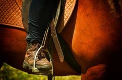 Dressurreitenpferd und -reiter Stockbild