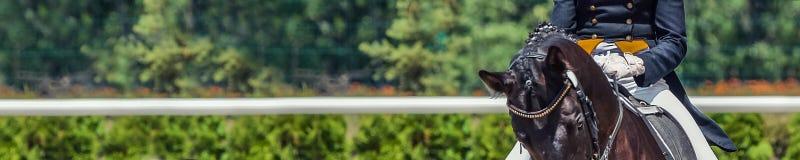 Dressurreitenpferd und -reiter, für Fahne stockfotografie