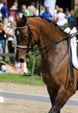 Dressuur met bruin paard Royalty-vrije Stock Foto