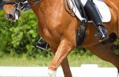 Dressuurpaard Stock Afbeeldingen