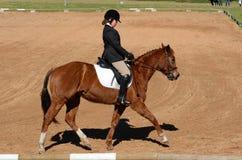 Dressyrhäst och ryttare Royaltyfria Bilder
