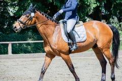 Dressyrridning för rid- sport på en dressyrkurs royaltyfri bild